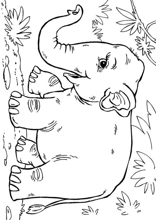 Coloring Page Asian Elephant Coloring Picture Asian Elephant