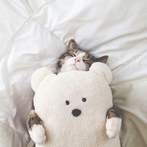 magicalnaturetour:  Hugs & Sweet Dreams beautiful friends ♥ Source