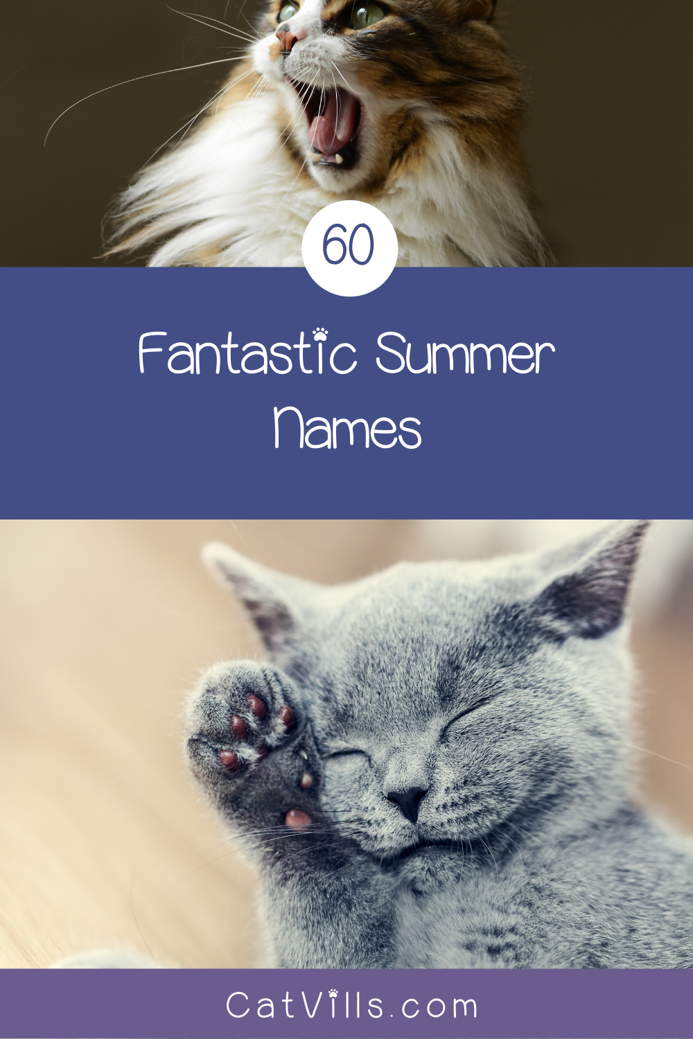 60 Summer Cat Names That Will Make You Feel Warm Fuzzy Catvills In 2020 Cat Names Cute Cats And Kittens Cats