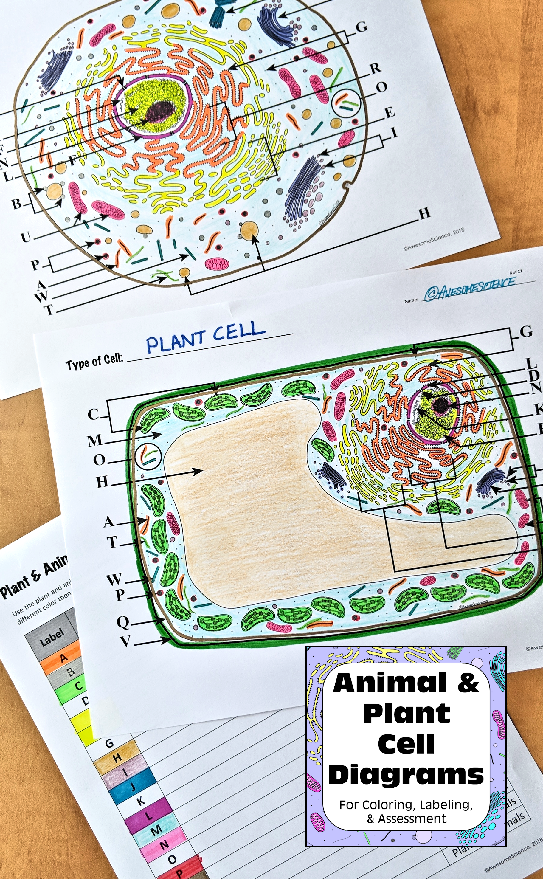 plant cell animal cell diagrams perfect for middle school or high school biology cell membrane plasma membrane cell wall centrioles chloroplasts  [ 1822 x 2949 Pixel ]