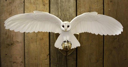 Barn Owl close-up Robin close-up Magpie Arctic Turn Zack ...