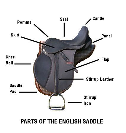 Parts Of The English Saddle Royal Grove Stables Blog Saddle