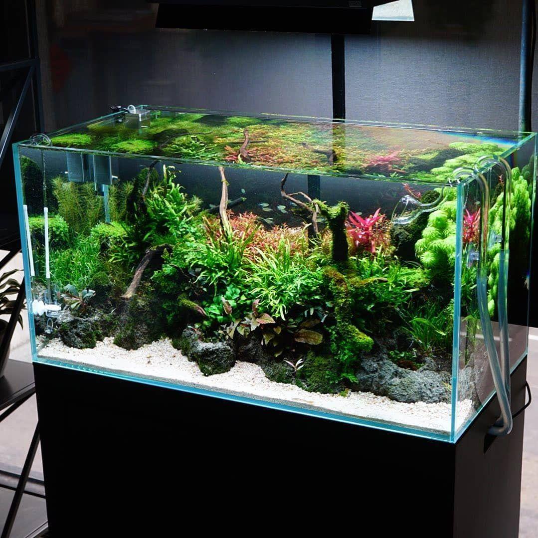 Aquascape inspiration in 2020