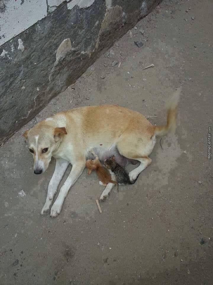 Stray Dog Feeding Stray Kittens In 2020 Street Dogs Cute Baby