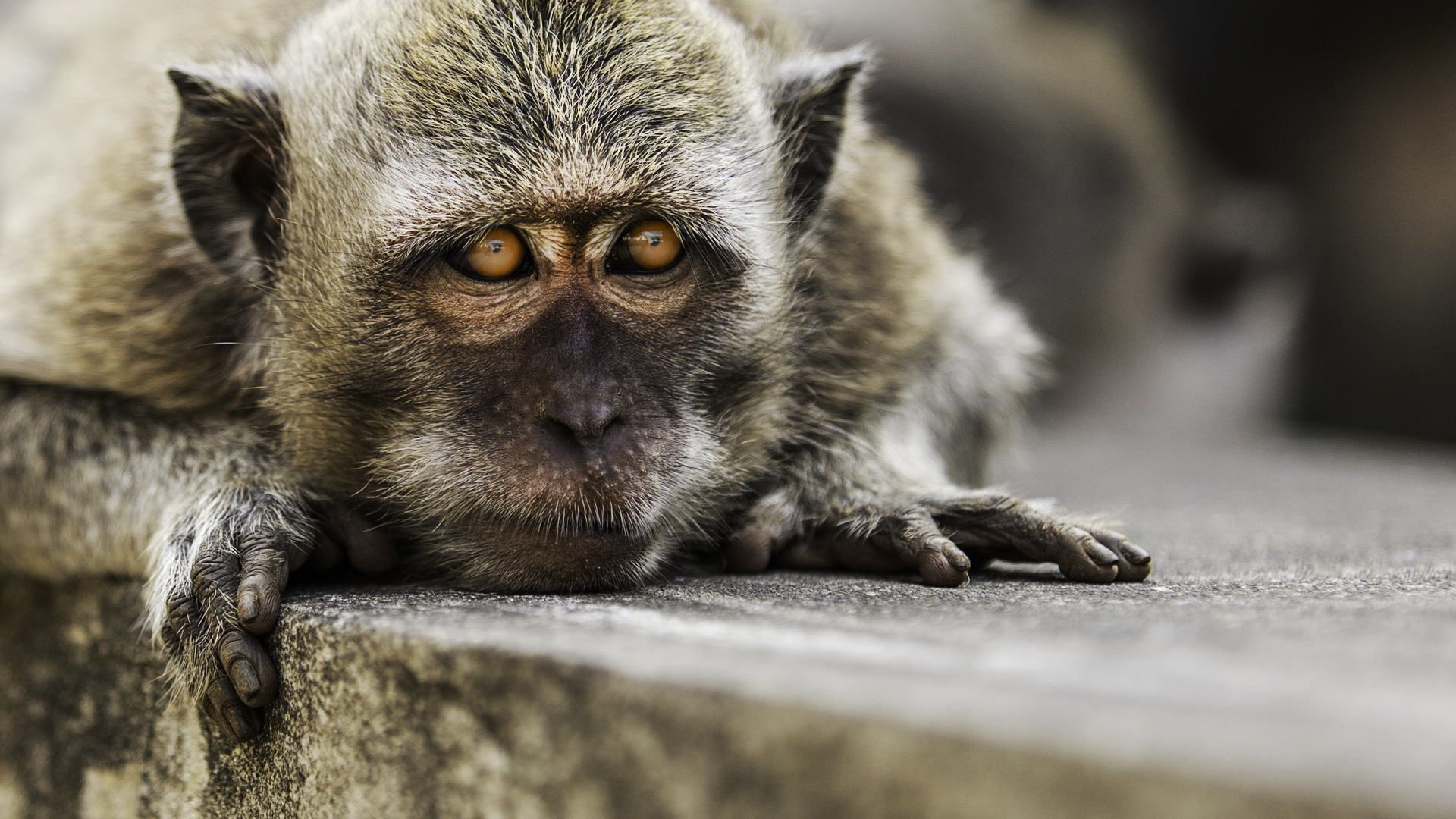 A Cheeky Monkey by Duane Moore on 500px