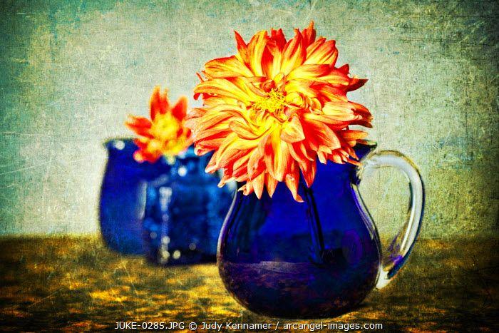 www.arcangel.com - orange-dahlia-flower-in-blue-container-with