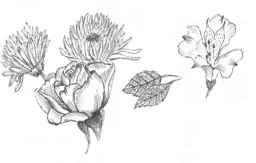 Flowers drawing tumblr buscar con google