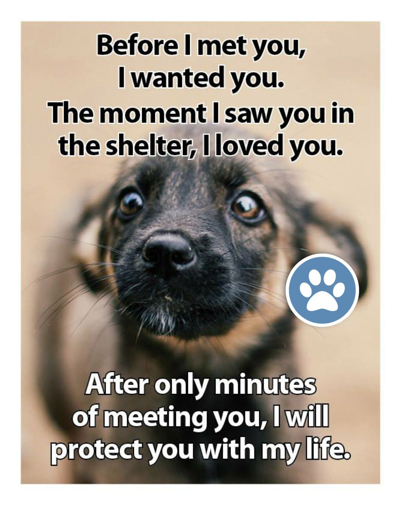 Pin By Kelly Steve On Free Dog Quotes Love Loyalty Compassion Paw Prints A Voice Dog Quotes Love Dog Quotes Free Dogs