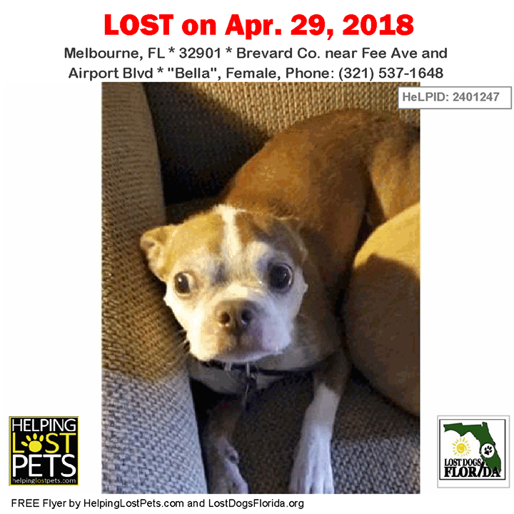 Missing since April 29 2018 Have you seen this lost dog?