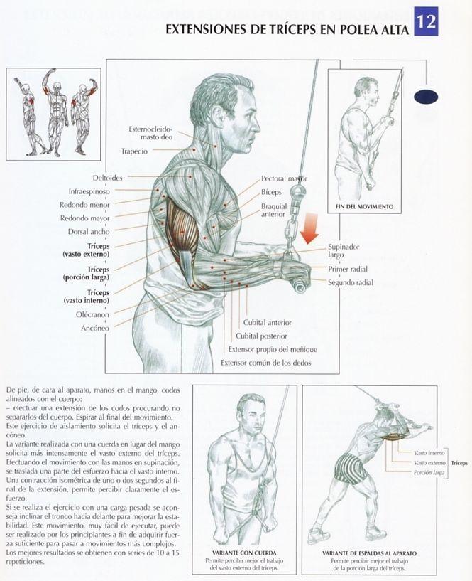 ejercicios extensiones triceps - Buscar con Google