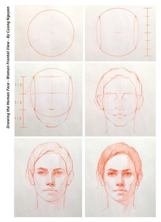 Female Face Front View Step By Step By Cuong Nguyen Https Www Facebook Com Icuong Fref Photo Drawing Tutorial Face Realistic Drawings Drawing Tutorial
