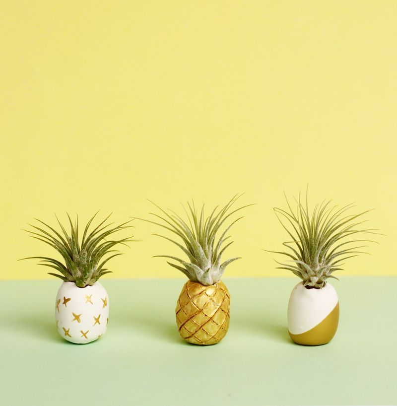 Spiky green air plants placed inside a sculpted holder offer a witty take on a familiar sight. See more at Small + Friendly »   - HouseBeautiful.com