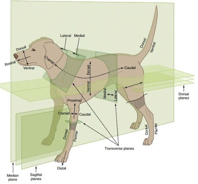 Anatomical Directional terms | Maurivet #VetTechLife | Veterinary ...