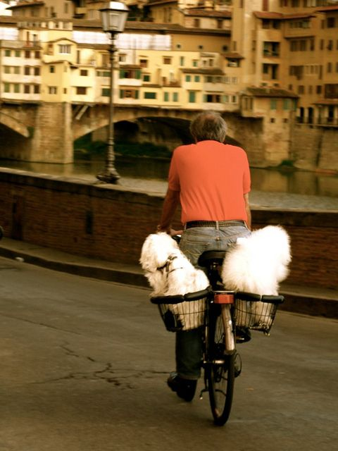 Dogs In The Baskets Florence With Images Bike Culture