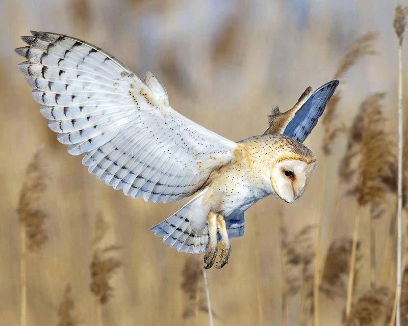 Christmas Cards /& Packs Owl in Flight Winter Nature Wildife Woodland /& freepost