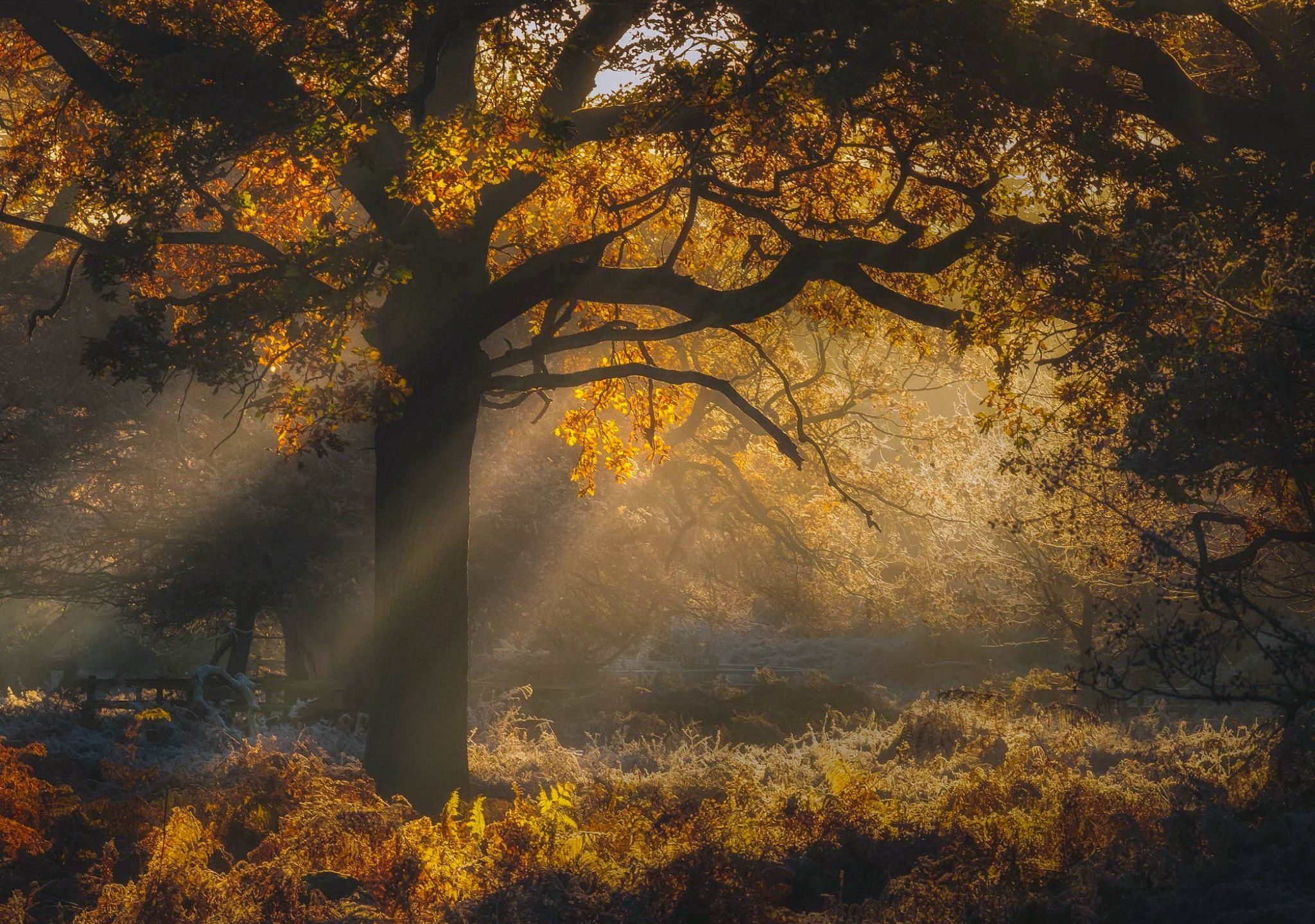 ***Enchanted Forest (Leicestershire, England) by Verity
