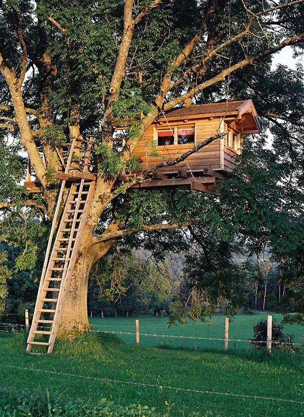 Awesometreehousebackyardgarden Treehouses Pinterest - Backyard treehouses