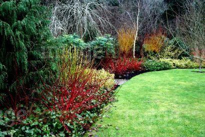 Rosemoor, Devon, England Winter Garden Ornamental Stems Plants In