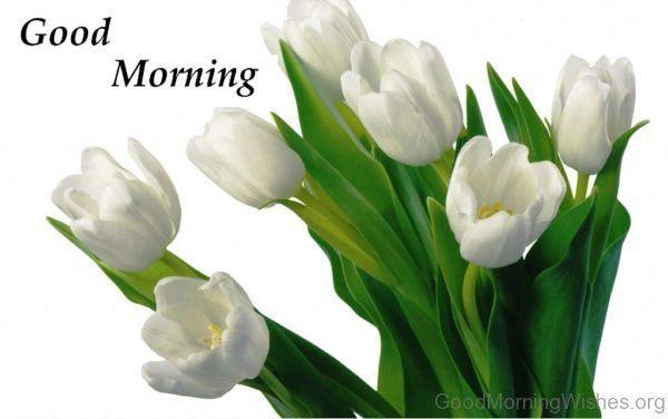 Good morning with beautiful white flower wishes pinterest good morning with beautiful white flower mightylinksfo