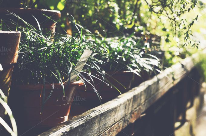 Plants by just_me on @creativemarket