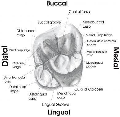 Image result for dental assistant study guide free | Dental ...