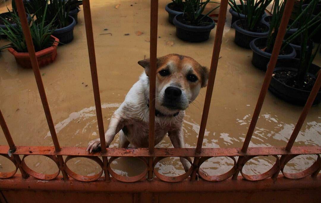 .. [4] Binatang pun juga ikut berendam di air banjir di perumahan sinar pondok benda (AL) pada tanggal 21 april 2016 bulan lalu. #citizenjurnalism  #photojurnalism  #fotokitaid  #hariankompas #explorebekasi #visitbekasi Re-post by Hold With Hope