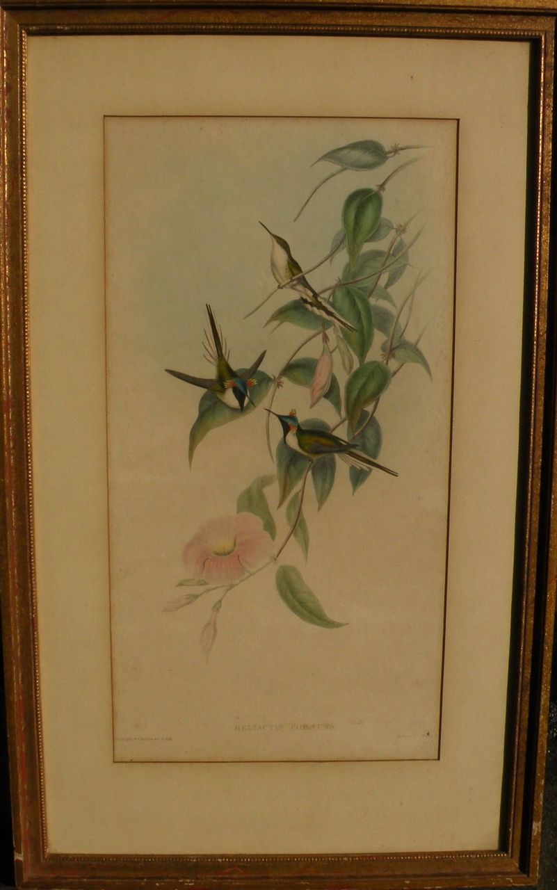 JOHN GOULD 1804 1881 Hand Colored Lithograph Print Of Hummingbirds From Jbfinearts On