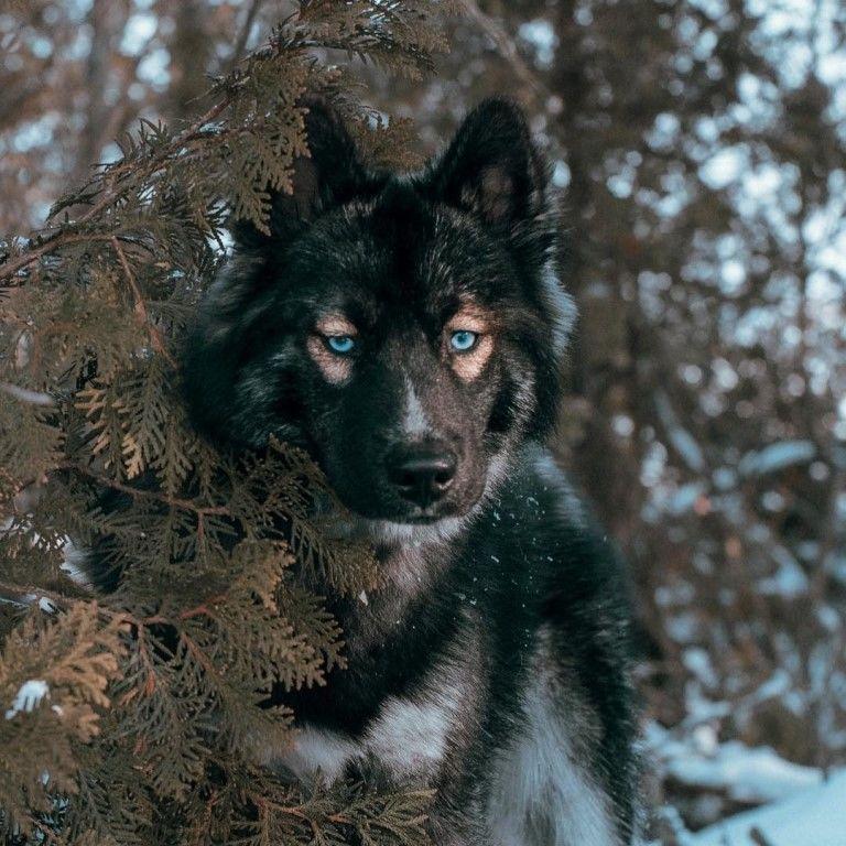 #животные | Голубоглазая собака, Животные, Собаки