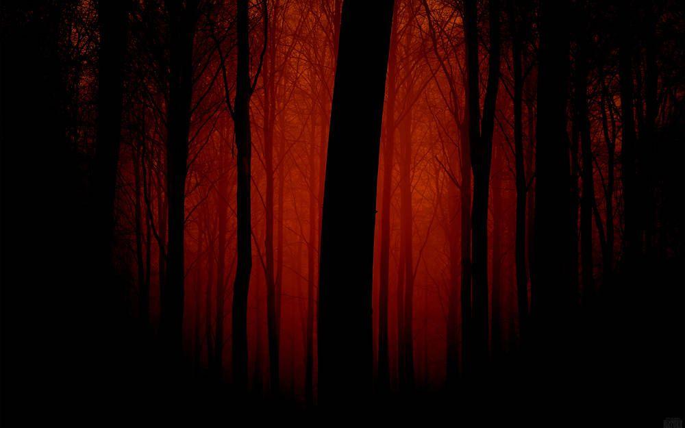 Sombre forêt effrayant. | Fond d'écran forêt, Foret, Sombre