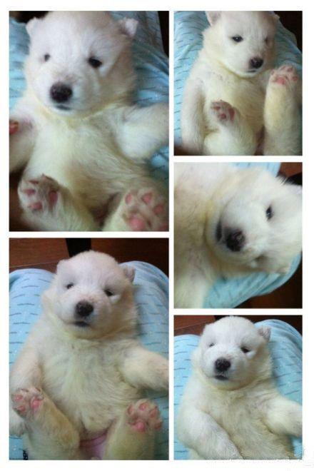 m polar bear baby