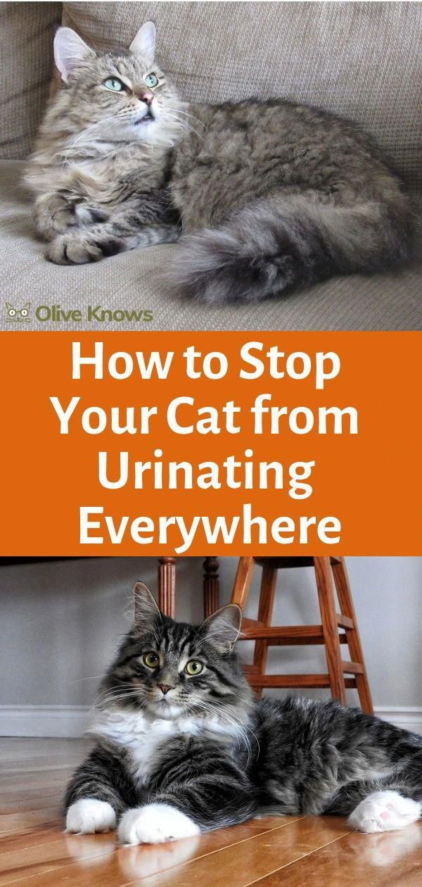 for Your Intractable Cat Cat training, Cat care, Cat