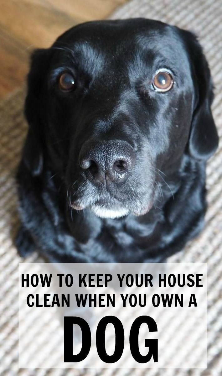 how to keep your house clean when you have a dog tips on