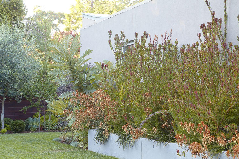 nolan1409301_15224297416_o.jpg Flora grubb, Plants, Garden