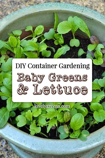How to grow salad greens in containers do it yourself today how to grow cut and come again and baby leaf greens in pots and containers find this pin and more on do it yourself solutioingenieria Choice Image