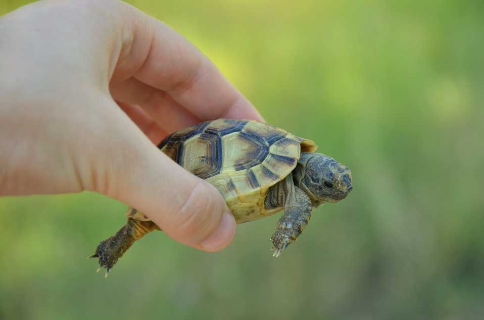 North American Box Turtles: What You Need To Know | Turtle ...