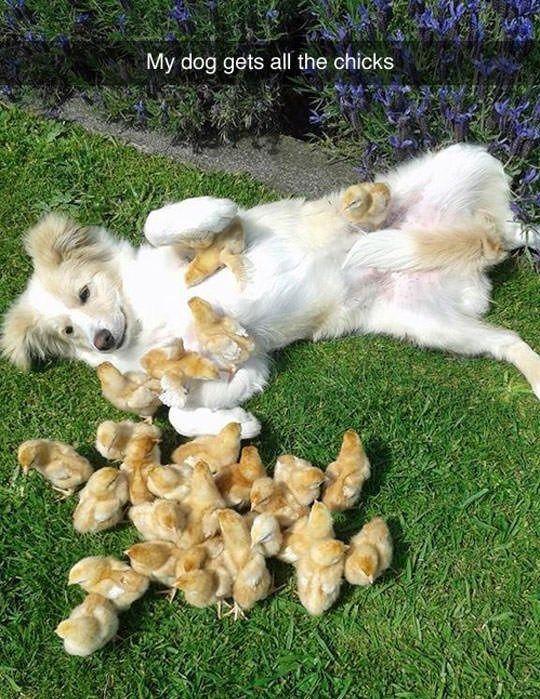 28 Doggo-Meme, die Sie von allem ablenken, was Sie tun sollen - Tiere Blog #hilariousanimals