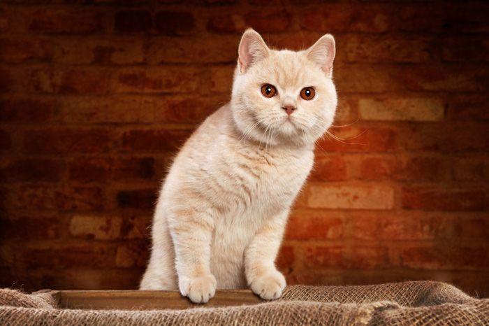 Adopt Spirit On Gatos Animales Felino