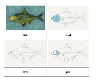 Parts Of A Fish Fish Template Fish Montessori Materials