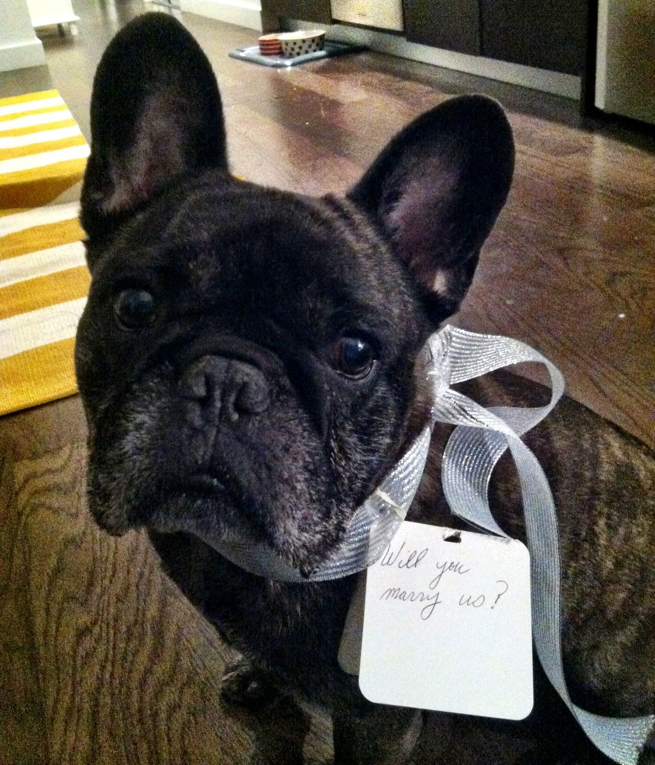 My name is Gozer. I live in NYC. My dad and I proposed