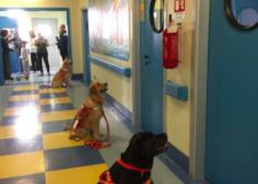 Quanta bellezza in questi cani: seduti in attesa che i piccoli pazienti dell'ospedale aprano loro le porte