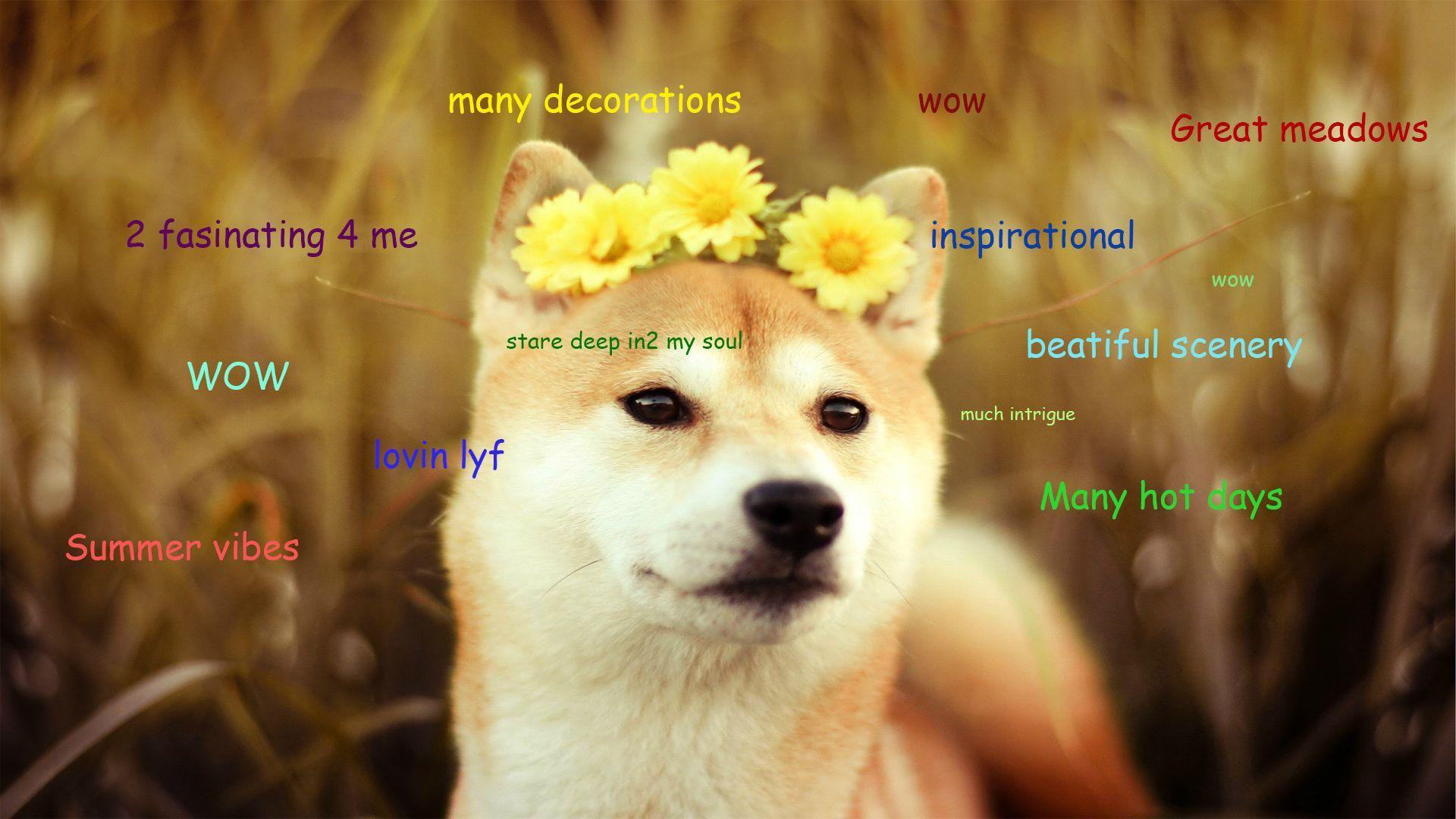 Ckwgcpe Jpg 1920 1080 Dog Jokes Shiba Inu Memes