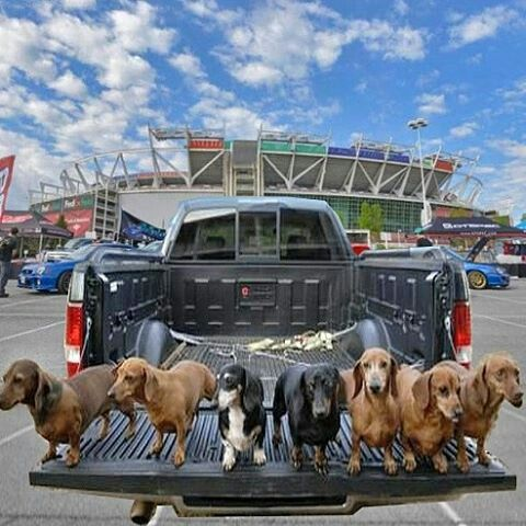 These Guys Were Having A Great Time Tailgating Until They Saw What