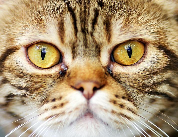 Frage Antwort Ist Alufolie Gesundheitsschadlich Tiere Katzen Und Welt Katzen Tag