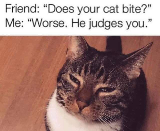 An XXL Sized Collection Of 64 Funny Memes