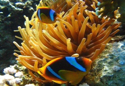 Tutto Incluso vi porta in viaggio a Sharm El Sheikh. Segui anche tu il magazine di Marcopolo condotto da Rosaria Renna dedicato al mondo dei viaggi e del turismo... http://www.marcopolo.tv/africa/sharm-el-sheikh-barriera-corallina