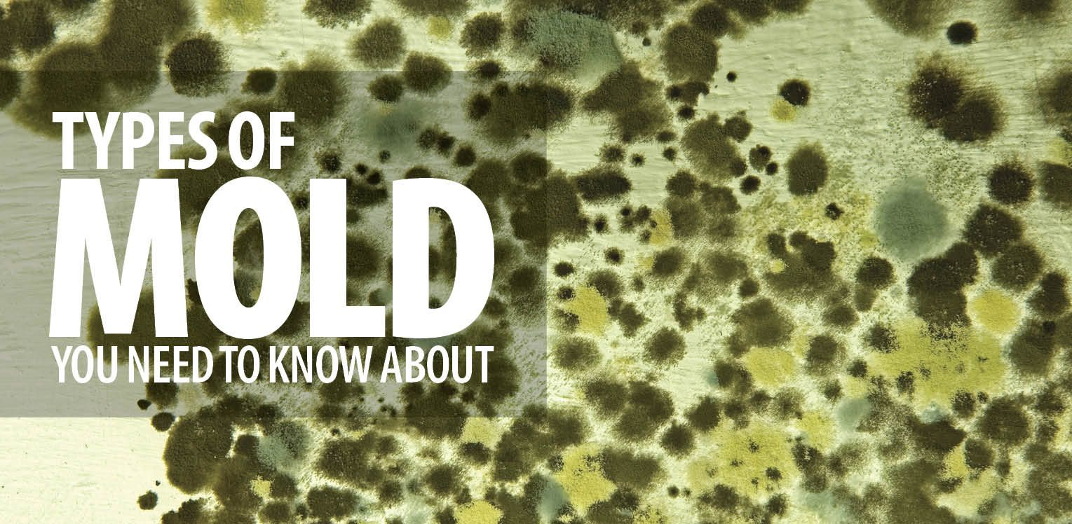 if youre seeing signs of mold do not hesitate to call us