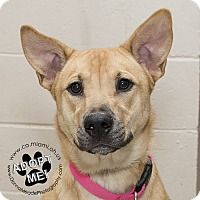 Urgent 2 10 17 Sandy Is A Young Shepherd Unknown Type Mix Dog
