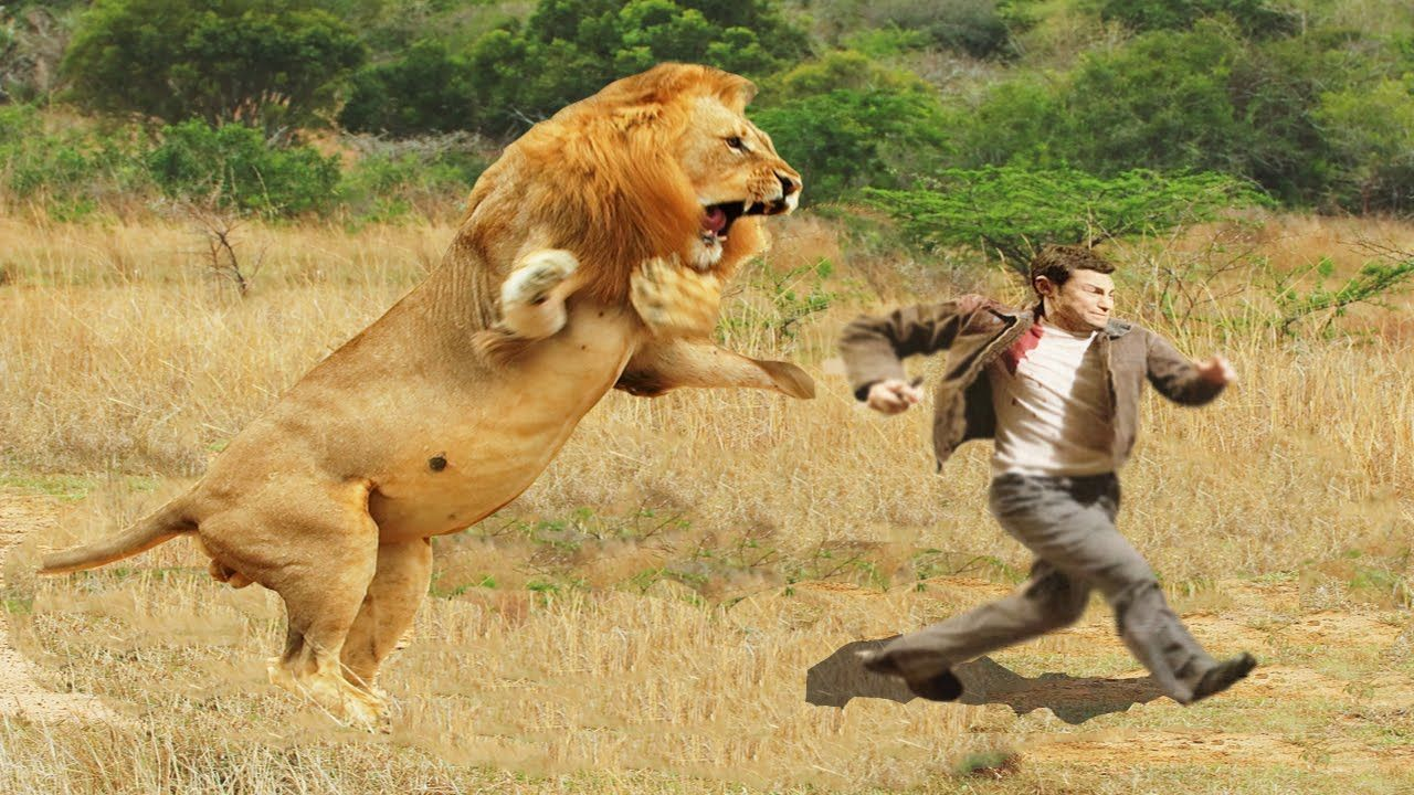 Lion fight with man - photo#2
