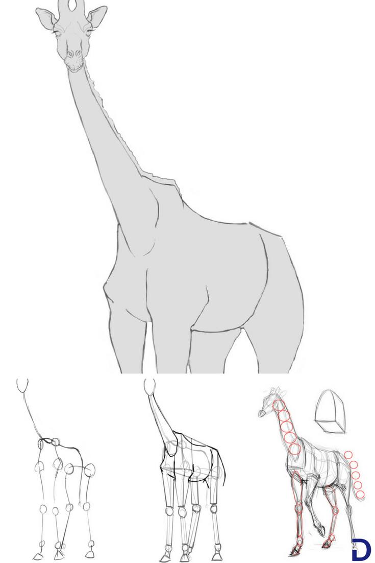Comment Dessiner Une Girafe Apprendre A Dessiner Avec Dessindigo