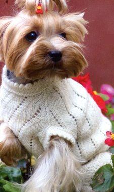 свитерок для йорка схема вязания спицами Knitting Crochet